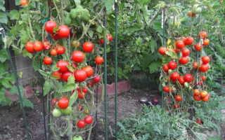 3 подкормки томатов в период плодоношения