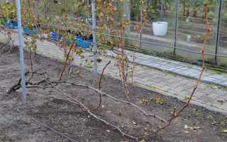 Зачем опрыскивать виноград осенью