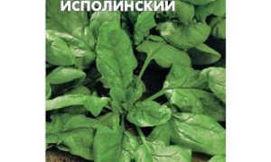 Виды и сорта шпината – Крепыш, Виктория, Спирос, Матадор, Спокейн, видео