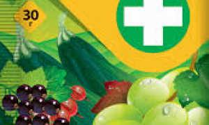 Инструкция по применению препарата Тиовит Джет для винограда и правила обработки