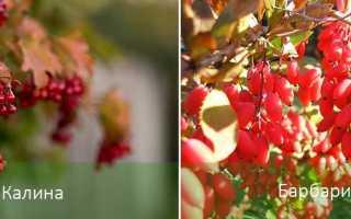 Выращивание теневыносливых растений для сада — создаем уютный уголок
