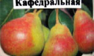 Груша 'Мелитопольская сочная'