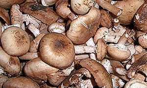Как быстро помыть грибы опята