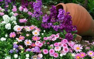 Как правильно сажать садовые растения, рекомендации, советы