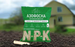 Как применять удобрение азофоску для картофеля?