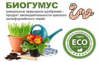 Биогумус для огурцов: применение подкормки в огороде