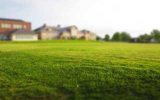 Выбор газонной травы и уход за газоном