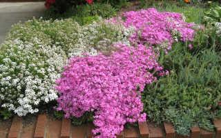10 идей для цветников с флоксами
