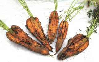 Как поливать морковь после посадки в открытый грунт, надо ли это делать сразу после посева