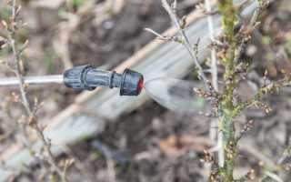 Для чего нужна обработка крыжовника от вредителей и болезней весной