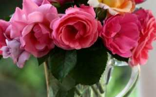 Как дольше сохранить срезанные розы: полезные советы