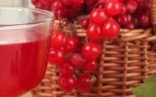 Вино из калины в домашних условиях – основные рецепты приготовления