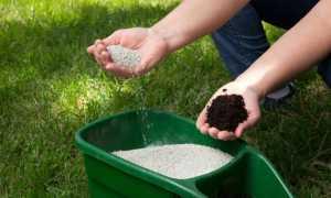 Как и чем удобрять газон весной