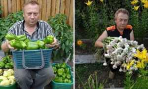 Как обустроить теплые грядки в огороде