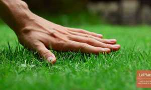 Все о газонах: типы газонов, выбор, посадка, уход
