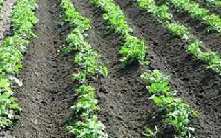 Ёжики для обработки картофеля