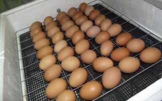 Как правильно заложить куриные яйца в инкубатор