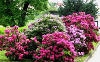 Выбираем цветущие кустарники-многолетники для дачи: 23 разновидности с фото