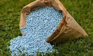 Весенняя подкормка сада – гарантия хорошего урожая!