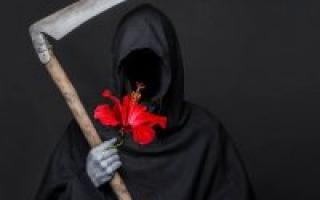 """Гибискус """"цветок смерти"""" – почему так назвали"""
