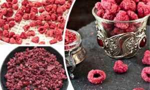 Как высушить малину в домашних условиях: сбор, подготовка и сушка ягод, способы сушки листьев и побегов для чая