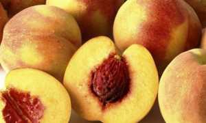 Как вырастить персик из косточки: поСадка и правильный уход, какие сорта выбрать