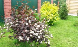 Белые цветы, деревья и кустарники для украшения сада
