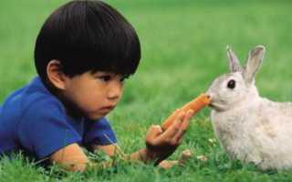 Болезни, строение зубов кроликов