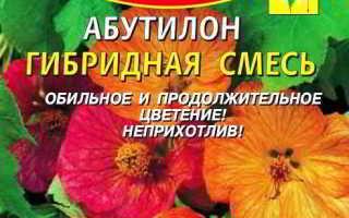 Абутилон из семян в домашних условиях: правила посева и ухода за сеянцами