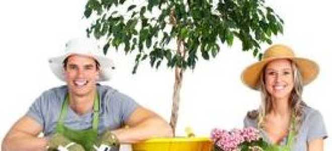 Дачная аптечка: лекарства для здоровья садовода