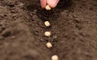 Дезинфекция семян – первый шаг к крепкой рассаде