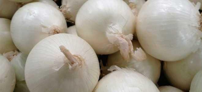 Как сажать белый лук от обычного