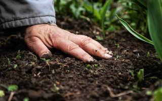 Как и какие выбрать удобрения для почвы