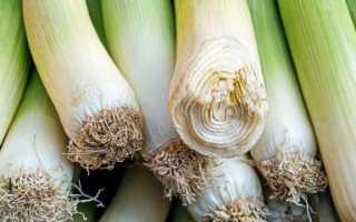 Где и как правильно хранить лук порей зимой в домашних условиях?