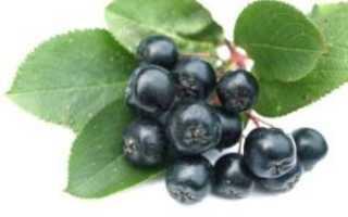 Заготовка черноплодной рябины: рецепты приготовления на зиму