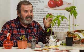 Выращивание помидоров на семена – советы дачникам и огородникам
