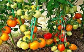 Как сажать помидору по два куста
