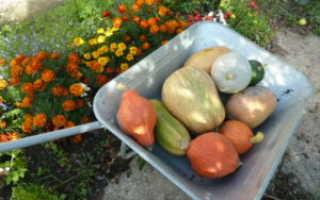 Как подготовить погреб к хранению овощей и фруктов