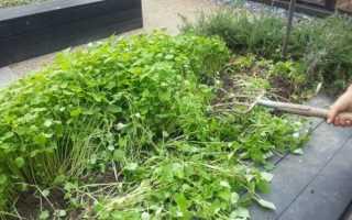 8 видов сидератов: когда сеять, когда закапывать сидераты, что это такое и что лучше