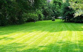 Как правильно выбрать электрическую газонокосилку