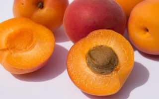 Как заготовить абрикос на зиму: сушеный и замороженный