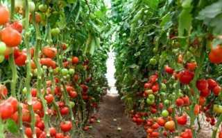 Как правильно обрезать томаты в теплице?