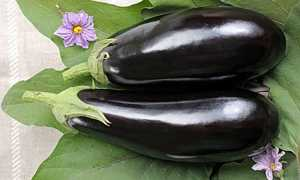 Баклажан Бегемот: описание сорта, фото, отзывы, урожайность