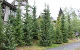 Как и какие деревья сажать на участке