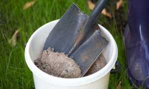 Как обработать лук древесной золой и можно ли?