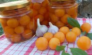 Алыча как оливки на зиму: рецепт маринования, правила хранения консервации