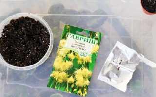 Как посеять эвкалипт – описание, размножение, уход, посадка, фото, применение в саду, сорта и виды