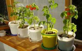 Как вырастить помидоры зимой в домашних условиях? Рекомендации