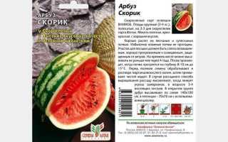 Арбуз Скорик – описание сорта, выращивание и отзывы