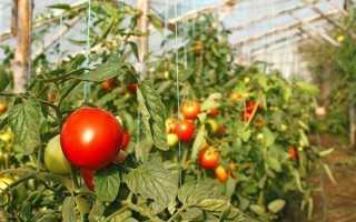 Как правильно проводить мульчирование томатов в теплице скошенной травой и другими материалами